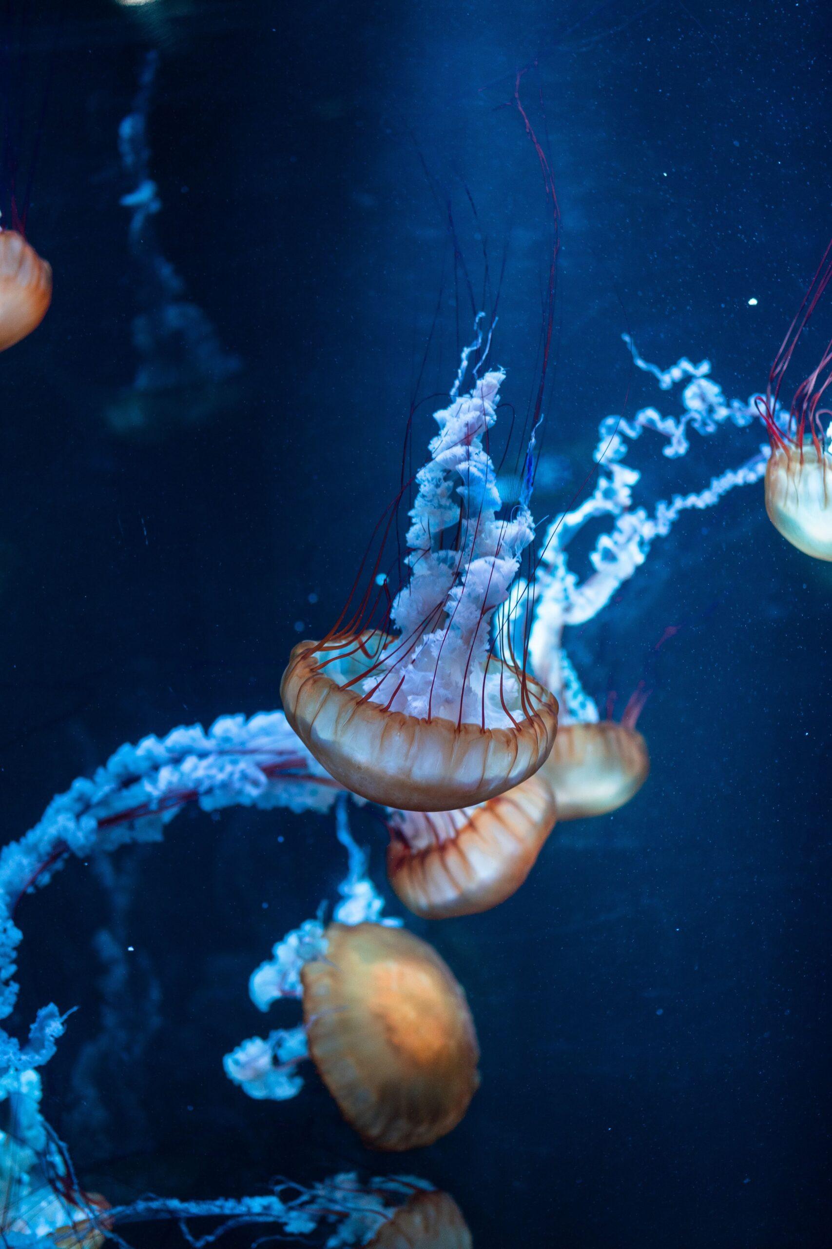 sứa biển